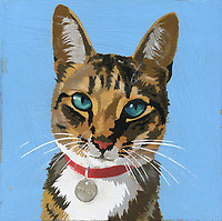 Portrait of cat wearing collar and name tag