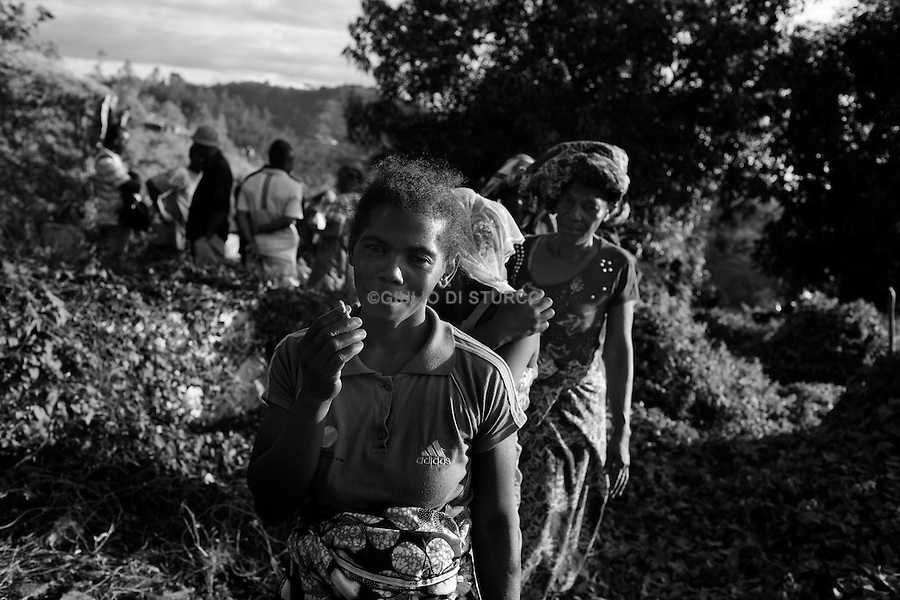 MADAGASCAR, AMBANJA, AUGUST 2013: <br />Friends of Dina, a member of one of the Cocoa Gang present in Ambanja, carrying his coffin to the cemetery during her funeral, 08 Aug, 2013.<br />Dina, 33, was killed two days earlier by the police with a headshot. The official version of the police said that the cops had gone there to arrest him, when he realized what was happening he reacted lunging toward the cops with a machette, and the cops had to shoot to legitimize the defense.<br />The Wife version it is complitely different she said to me:<br />while we were sleeping, police broke down the door and 'entry into the house. They handcuffed my husband and asked him three times if he was Dina.<br />then they bumped near the door and fired two shots in the head. @Giulio Di Sturco