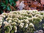 Lichens and Fungi