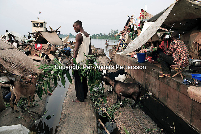 MBANDAKA, DEMOCRATIC REPUBLIC OF CONGO JUNE 26: A unidentified man feeds his goats while traveling on a boat made of big trees on the Congo River on June 26, 2006 outside Mbandaka, Congo, DRC. The boat traveled with about 150 passengers from Bumba to Kinshasa, a journey of about 1300 kilometers. The Congo River is a lifeline for millions of people, who depend on it for transport and trade. Passengers slept in the open, with their goats, pigs and other animals. Boat travel is the only option for most people along the river as there?s no roads or infrastructure. Very few can afford to fly in a plane to the capital Kinshasa. During the Mobuto era, big boats run by the state company ONATRA dominated the river. These boats had cabins and restaurants etc. All the boats are now private and are mainly barges that transport goods. The crews sell tickets to passengers who travel in very bad conditions. The conditions on the boats often resemble conditions in a refugee camp. Congo is planning to hold general elections by July 2006, the first democratic elections in forty years. The Congolese and the international community are hoping that Congo will finally have piece and the country will be rebuilt. (Photo by Per-Anders Pettersson)..