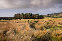 Reeds and grassland with a copse at Bleasdale, Lancashire.