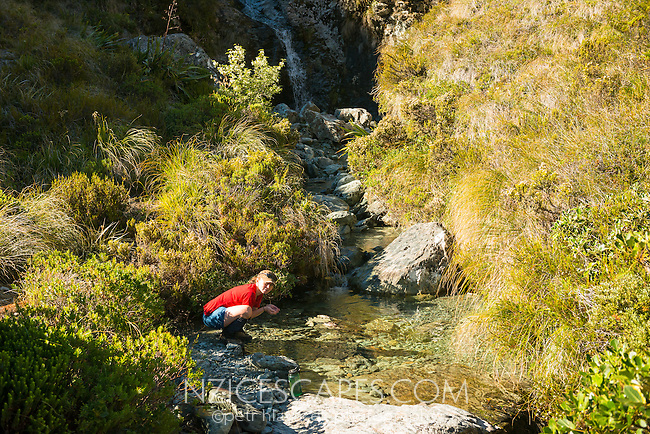 Tramper drinking from alpine stream near Routeburn Falls, Mt. Aspiring National Park, UNESCO World Heritage Area, Central Otago, New Zealand, NZ