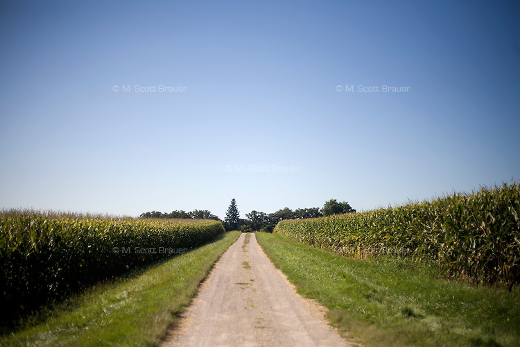 A farm road goes between corn fields in rural central Iowa, USA.