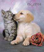 Interlitho, Alberto, ANIMALS, cats, photos, dog, cat, rose(KL15708,#A#)