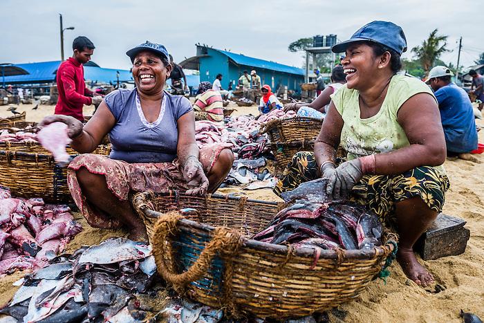 Negombo fish market lellama fish market photo of women for Williams fish market