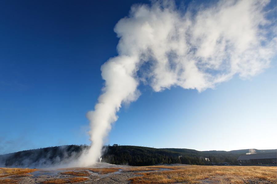Early morning Old Faithful geyser eruption, Yellowstone National Park, Wyoming, USA