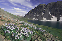 Clear Lake and wildflowers in alpine meadow, Blue Columbine,Colorado Columbine,Aquilegia coerulea, Ouray, San Juan Mountains, Rocky Mountains, Colorado, USA, July 2007