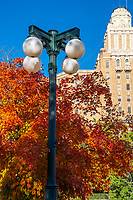 Hot Springs Arkansas with these great fall colors on this sugar maple tree with this retro street lamps and the schools for retraning tech institutes in the background.