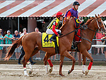 Mind Your Biscuites (no. 4) in the Whitney Stakes (Grade I) Post Parade,  Aug. 4, 2018 at the Saratoga Race Course, Saratoga Springs, NY.  Ridden by Joel Rosario.  (Bruce Dudek/Eclipse Sportswire)