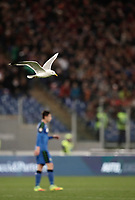 Calcio, Serie A: Roma, stadio Olimpico, 19 marzo, 2017<br /> A seagull flies during the Italian Serie A football match between Roma and Sassuolo at Rome's Olympic stadium, March 19, 2017<br /> UPDATE IMAGES PRESS/Isabella Bonotto