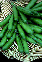 Bean 'Martok' broad bean vegetables harvested crop on plate, food plant