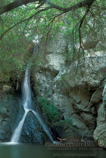 Riparian habitat at Darwin Falls,  Darwin Canyon, Death Valley National Park, California