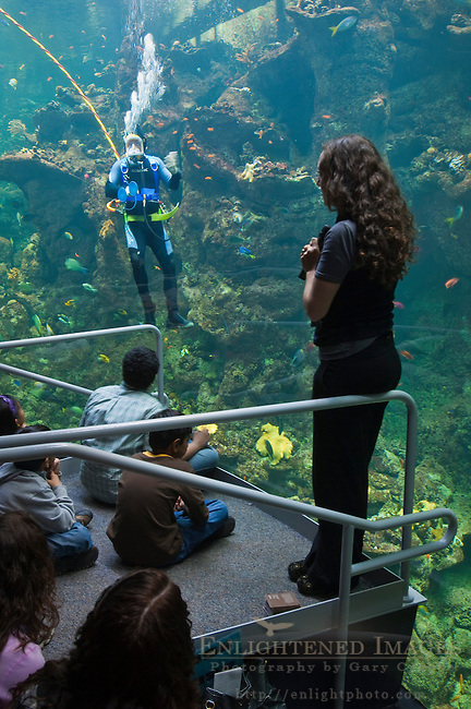 Speaker and divers giving an educational presentation to visitors at the Coral Reef exhibit tank, Steinhart Aquarium, California Academy of Sciences, Golden Gate Park, San Francisco, California