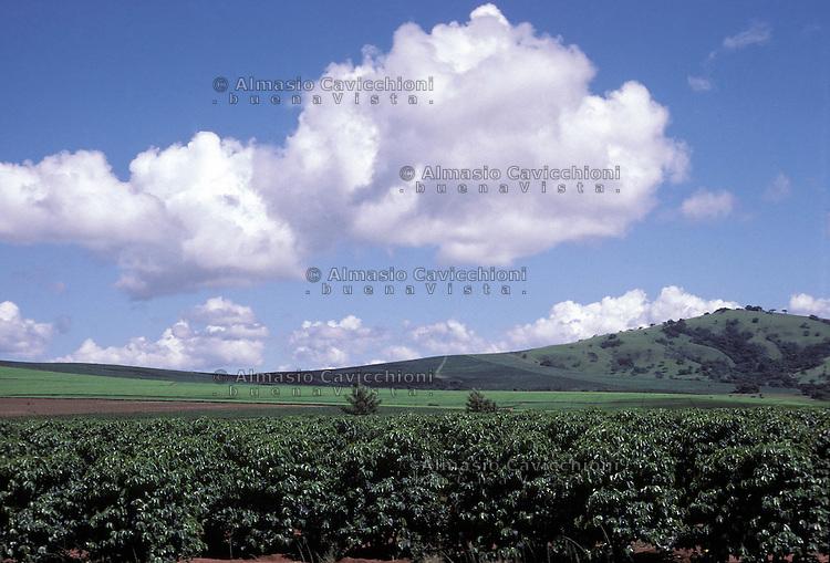 ZIMBABWE - Chipinge, piantagioni di te' e caffe' (davanti).ZIMBABWE - Chipinge, Tea plantations and coffee in front..