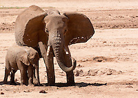 Elephants at the Water Bore Hole   Keyna 2015