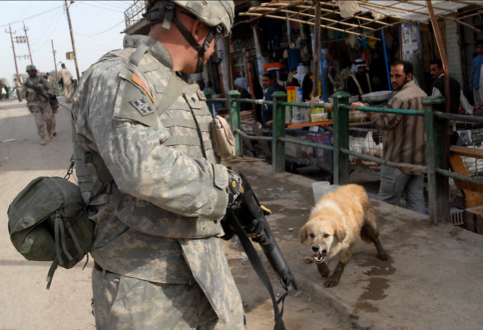 Spc. Stan Sneathen, 24 of Lubbock, TX passes an angry dog while on patrol on the streets of Mussayib, Iraq. Members of D Company 1-67 Armor were patrolling the town near Karbala as pilgrims pass through on the way to Arbayin religious festival. The dog was not injured. March 19, 2006. (James J. Lee / Army Times)