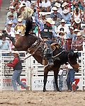 PRCA cowboy Cort Scheer scored an 82 point rookie saddle bronc ride on the bronc #21 during  the final round action at the 112th annual Cheyenne Frontier Days Rodeo in Cheyenne, Wyoming on July 27, 2008. Dusty's score of 228 points on three head was enough to win the championship buckle.