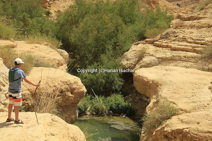 Israel, Nahal Arugot in the Judean desert