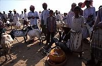 Wadi Moor sheep market, Yemen