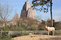 Scimitar oryx (Oryx dammah), North African oryx now extinct in the wild, with the Grand Rocher or Great Rock in the background, in the Zone Sahel-Soudan of the new Parc Zoologique de Paris or Zoo de Vincennes, (Zoological Gardens of Paris or Vincennes Zoo), which reopened April 2014, part of the Musee National d'Histoire Naturelle (National Museum of Natural History), 12th arrondissement, Paris, France. Picture by Manuel Cohen