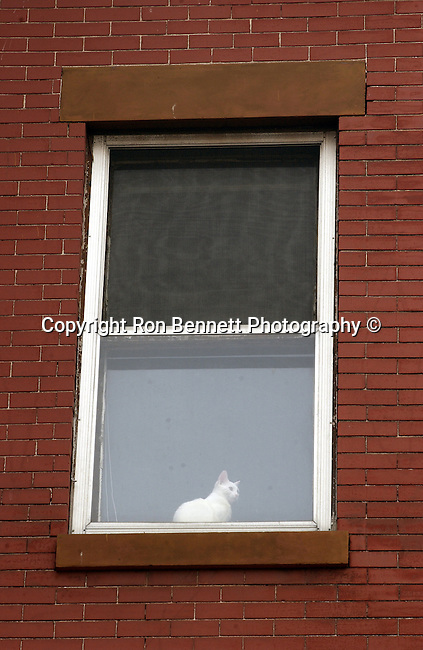 Cat in window SE Washington DC, Fine Art Photography by Ron Bennett, Fine Art, Fine Art photo, Art Photography,