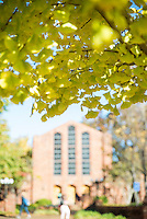 Fall photos. (photo by Sarah Dutton / © Mississippi State University)