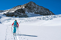 Ski touring to climb the Wetterhorn, a beautiful peak towering above Grindelwald, Switzerland, that requires glacier travel on the Rosenlauigletscher to the final short climb to the summit.
