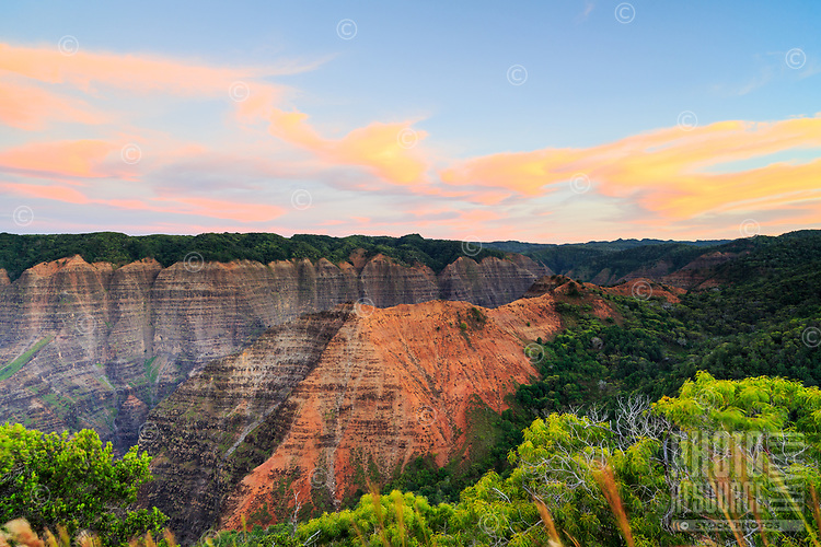 Dawn light paints the sky in pastel hues atop the Kohua Ridge Trail, Waimea Canyon, Kaua'i.