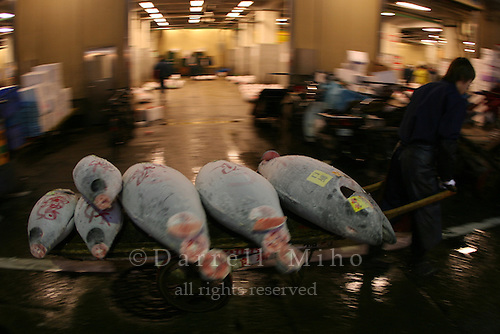 Mar 4, 2006; Tokyo, JPN; Tsukiji.A buyer carts away his recently purchased frozen tuna at the Tsukiji Fish Market...After tuna is caught, it is flash frozen at sea to keep it fresh until it is brought to the market to be sold...Photo credit: Darrell Miho