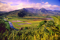 Taro fields in Hanalei Valley along the north shore of Kaua'i.