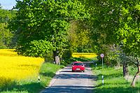 Rotes Auto fährt auf einer Landstraße neben einem Feld mit Raps (Brassica napus) im Boitzenburger Land, Uckermark, Brandenburg, Deutschland