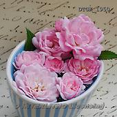 Gisela, FLOWERS, BLUMEN, FLORES, photos+++++,DTGK1950,#f#