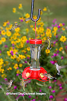 01162-12611 Ruby-throated Hummingbirds (Archilochus colubris) at feeder near flower garden,  Marion Co.  IL