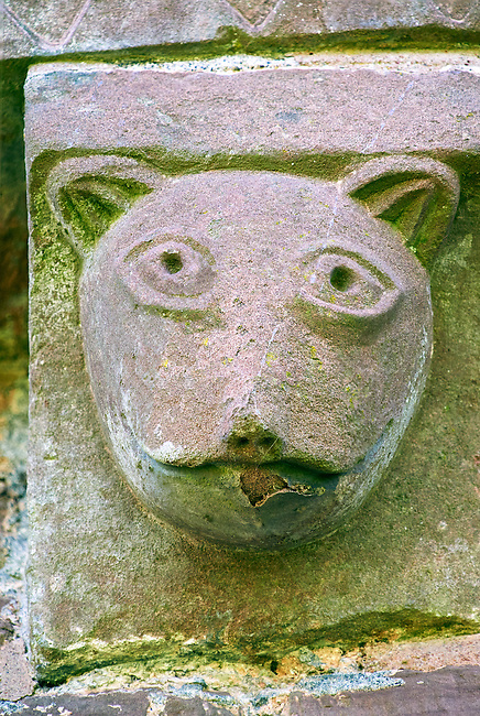 Norman Romanesque exterior corbel no 43 - sculpture of an animal head, maybe a cat. The Norman Romanesque Church of St Mary and St David, Kilpeck Herefordshire, England. Built around 1140