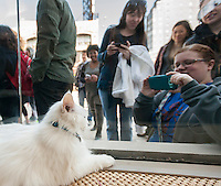 Cat lovers on line outside the Cat Cafe on the Bowery in New York on its grand opening day, Thursday, April 24, 2014. Purina has teamed with the North Shore Animal League to open the pop-up cafe where cat aficionados are not afraid to get a little fur on their clothing while they snuggle the adoptable cats, drink cappuccino and eat pastries. The kitties are free-range around the store and the customers can pet them, pick them up and play with them. Cat cafes are already big in Japan and this pop-up store is a first for New York. The event only goes until April 27 when you can take your adopted kittie home. (© Richard B. Levine)