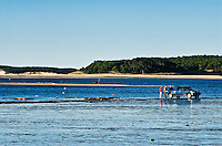 Oyster fisherman harvesting his traps, Wellfleet, Cape Cod
