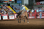 Logan Cook on Apple Bottoms of Stockyards Pro Rodeo during first round of the Fort Worth Stockyards Pro Rodeo event in Fort Worth, TX - 8.16.2019 Photo by Christopher Thompson