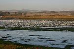 Gulls and shorebirds at Elkhorn Slough