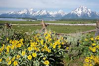 Spring Flowers in Grand Teton National Park