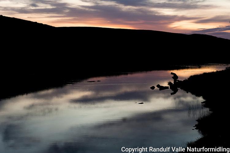 Fluefisker i solnedgang. ---- Flyfisher at sunset.