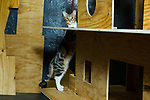 Stripes exploring Mohammed's latest cat house project:  a two-story house with staircases and a front porch.