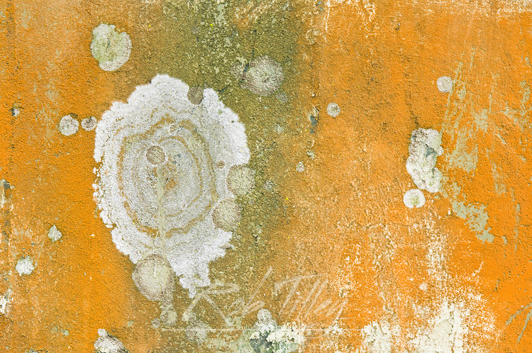 Abstract Detail of Concrete Wall, Artillery Hill, Fort Warden, Port Townsend, WA, USA