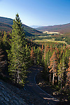 Trail Ridge Road, travel, dying conifer forest, predominantly lodgepole pine, mountain pine beetle infestation, above Kawuneeche Valley, Rocky Mountain National Park, Colorado, USA, Rocky Mountains