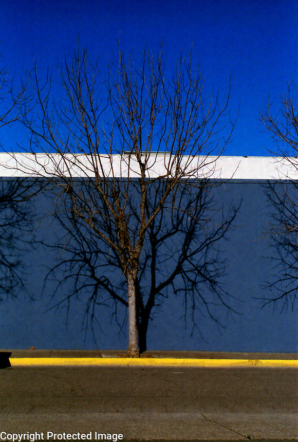 Winter Tree in Downtown Ukiah