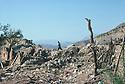 Iran 1979.In a village near the Iraqi border, bombed by the Iraqi planes