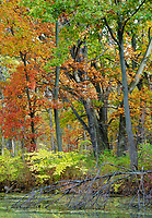 An autumn hued forest fills the sky at the edge of Mark's Pond at Green Valley Forest Preserve in DuPage County, Illinois