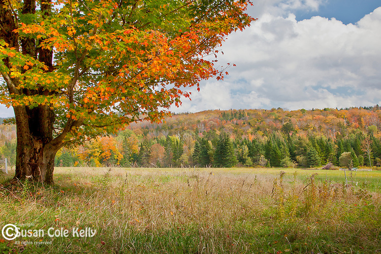 Fall foliage in Groton, VT, USA