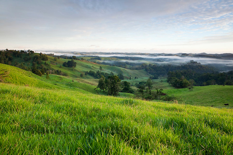 Rolling pastures on the Atherton Tablelands.  Millaa Millaa, Queensland, Australia