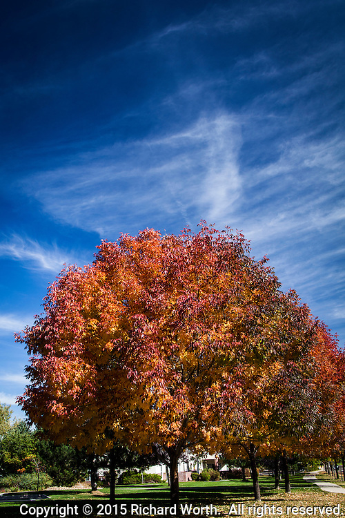 Trees draped in autumn hues along a neighborhood street in Boulder, Colorado, under a blue sky with streaks of white clouds.