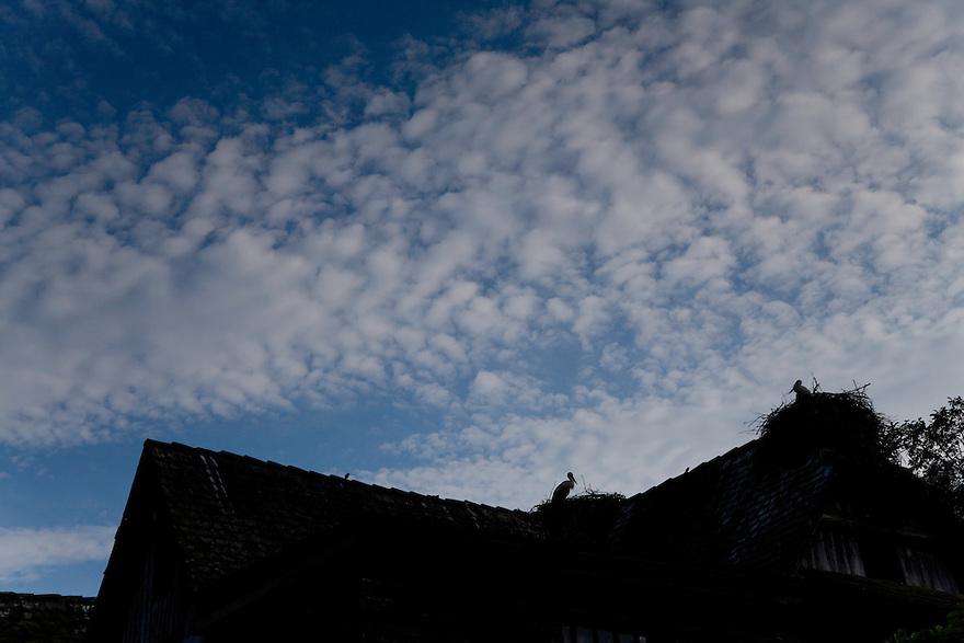 White stork (Ciconia ciconia) resting on roof. Čigoč village: recognized as the first founded European Stork Site by the E.U.; one of the European Stork Villages European network. Lonjsko Polje Nature Park. Ramsar Site. Sisack-Moslavina county. Slavonia region. Posavina area. June 2009. Croatia.<br /> Elio della Ferrera / Wild Wonders of Europe